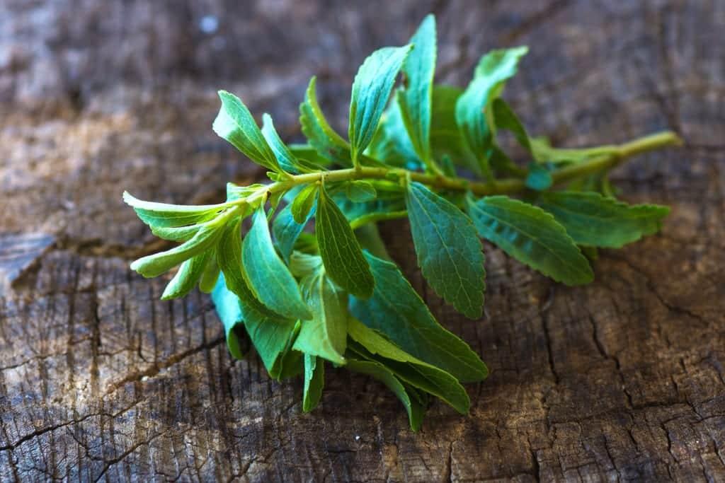 stevia die kalorienlose wunderpflanze aus paraguay. Black Bedroom Furniture Sets. Home Design Ideas