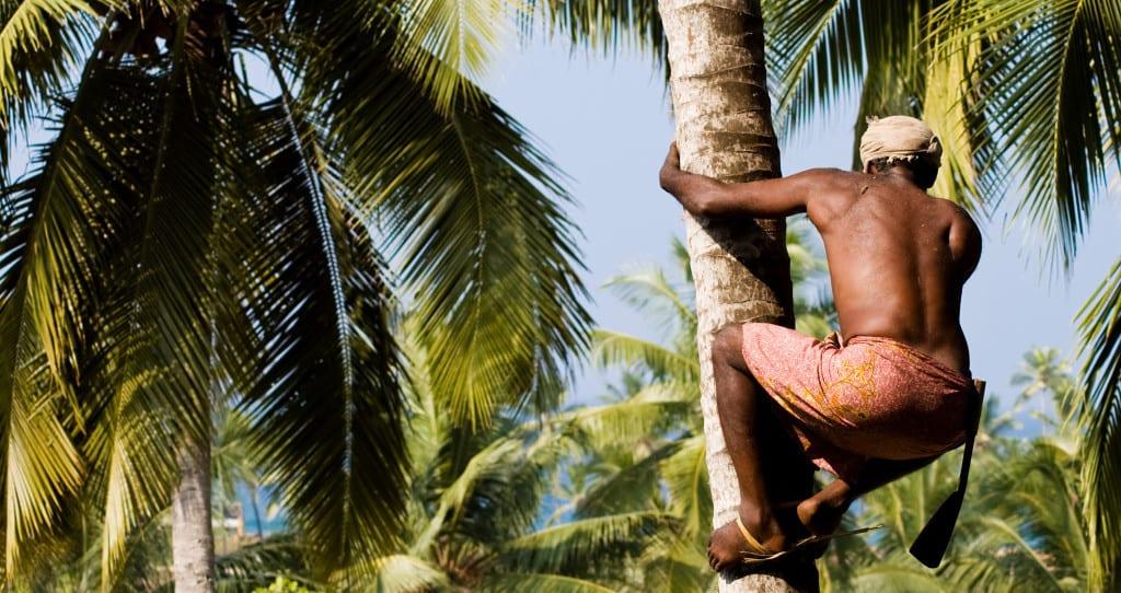kokosbl tenzucker eine gesunde alternative zu zucker. Black Bedroom Furniture Sets. Home Design Ideas