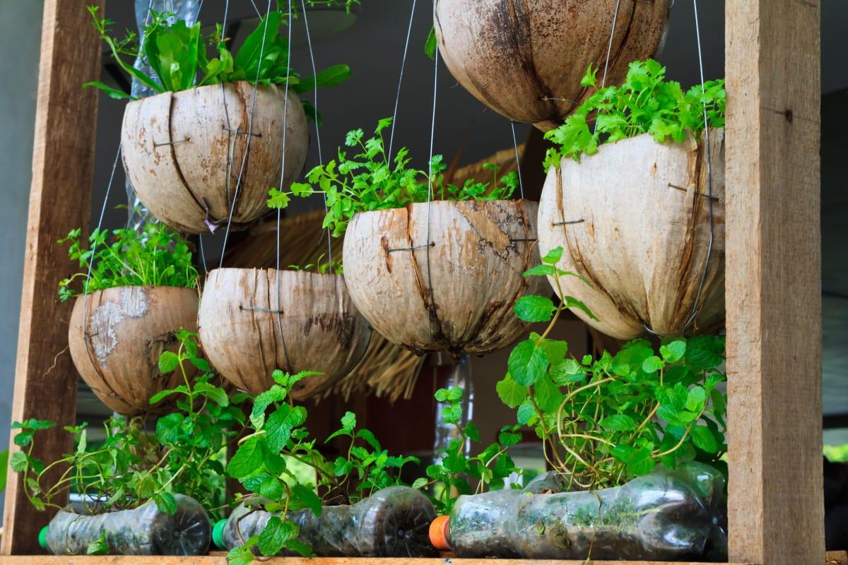 Kräuterkunde - Frische Kräuter Selber Ziehen | Miomente ... Krauter Balkon Pflanzen