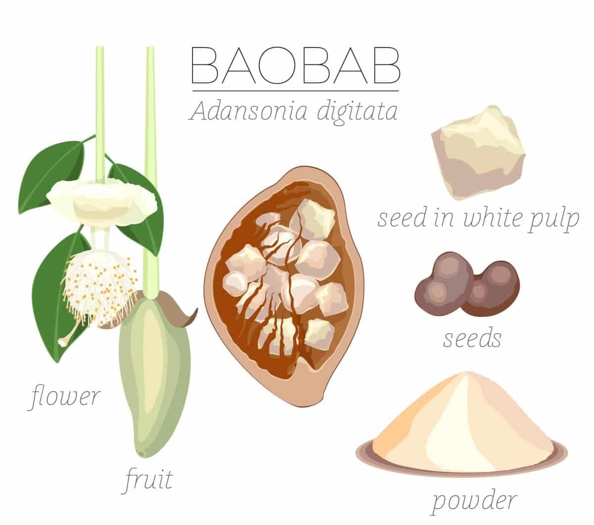 Baobab Frucht Samen Pulver Das Superfood Aus Afrika Miomente