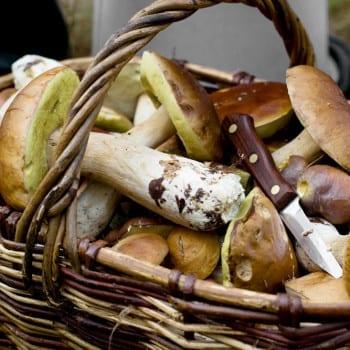 Quiz essbare und giftige pilze miomente entdeckermagazin for Moos konservieren
