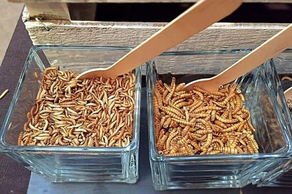Insekten Essen ist Trend - Mehlwürmer und Heimchen