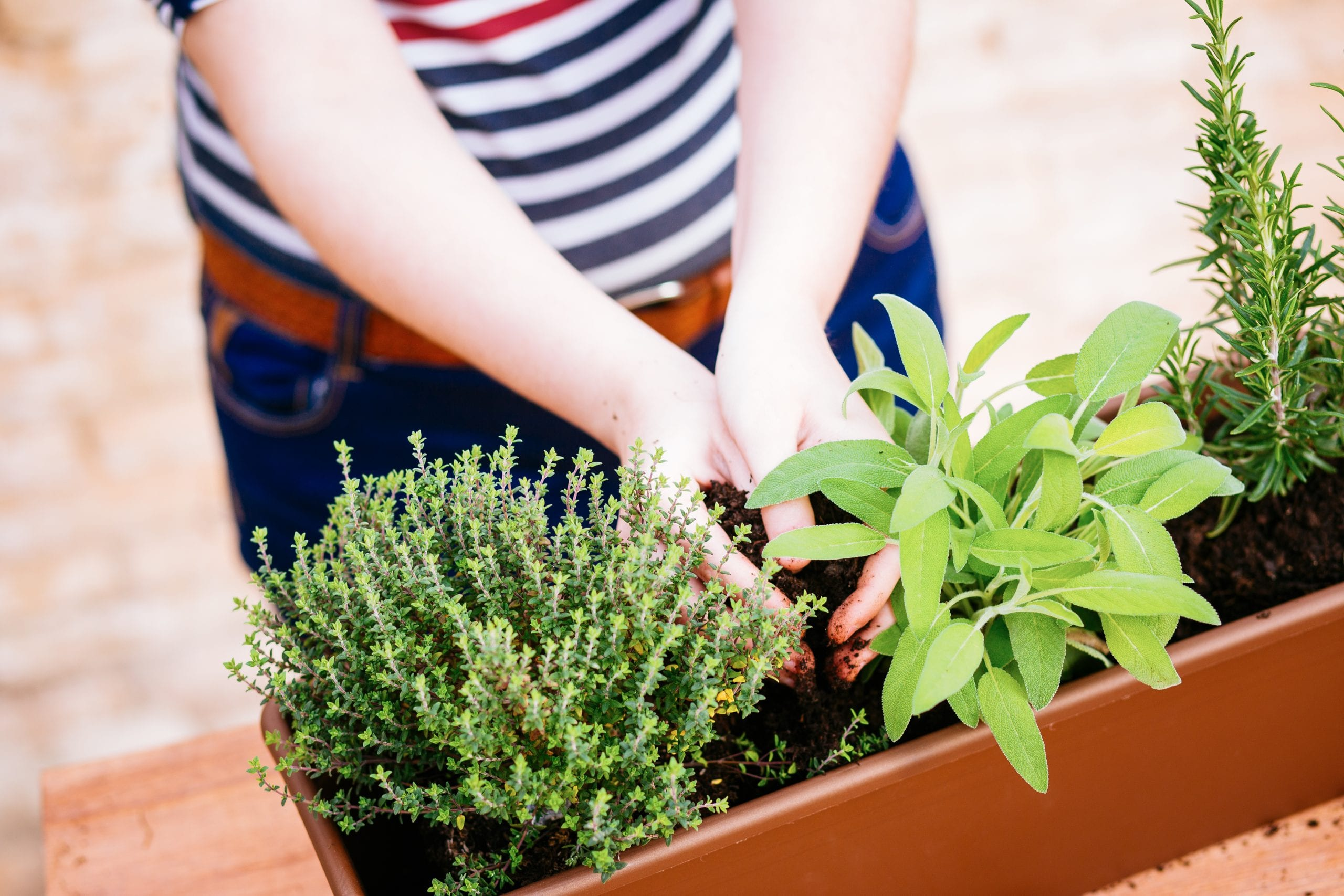 kräuterkunde - frische kräuter selber ziehen | miomente, Gartengerate ideen