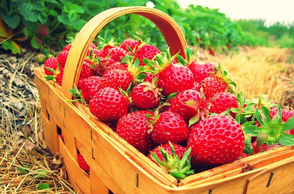 erdbeeren selber pflücken wuppertal