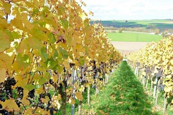 Der Weinhandel in Augsburg