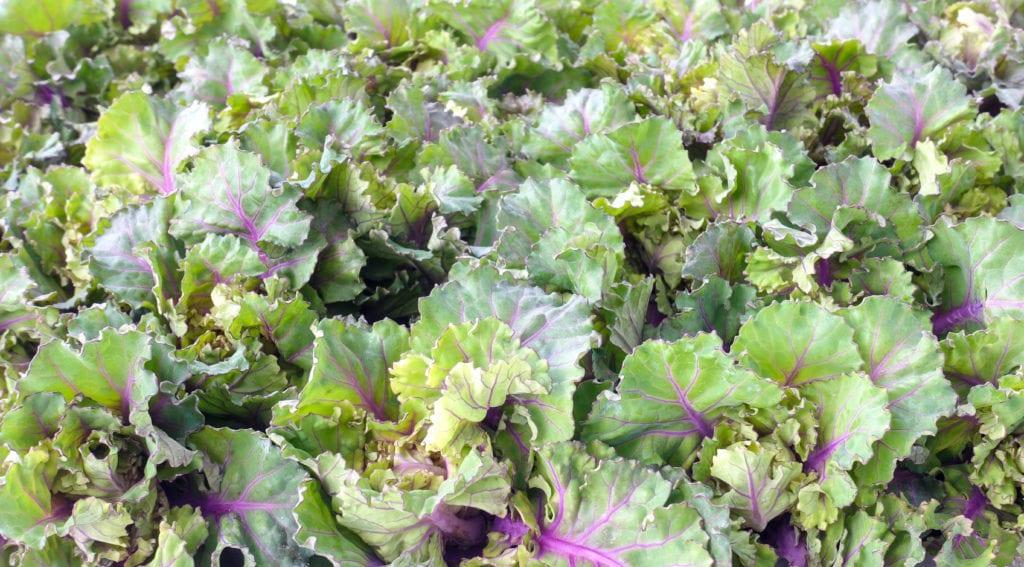 Flower Sprouts - Miomente Entdeckermagazin