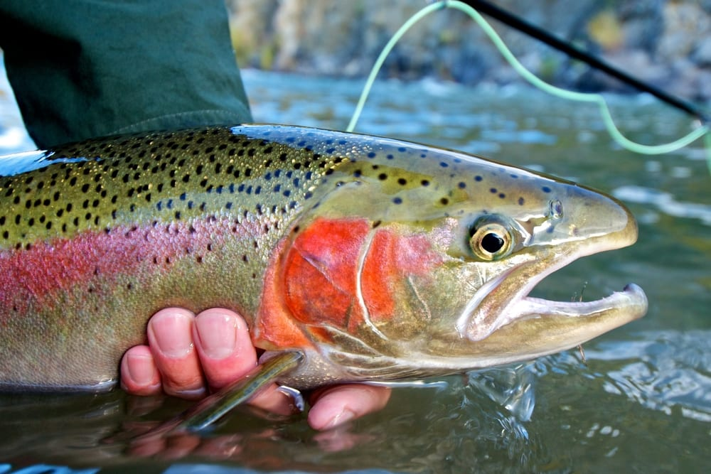 Wie erkennt man frischen Fisch?
