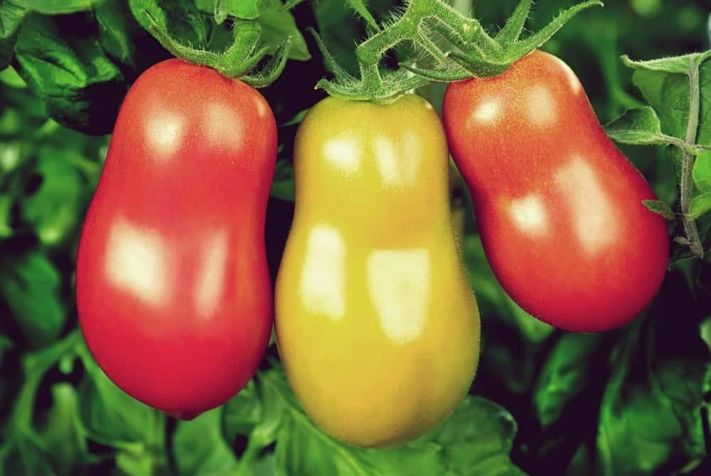 die 6 besten tomaten rezepte der saison miomente entdeckermagazin