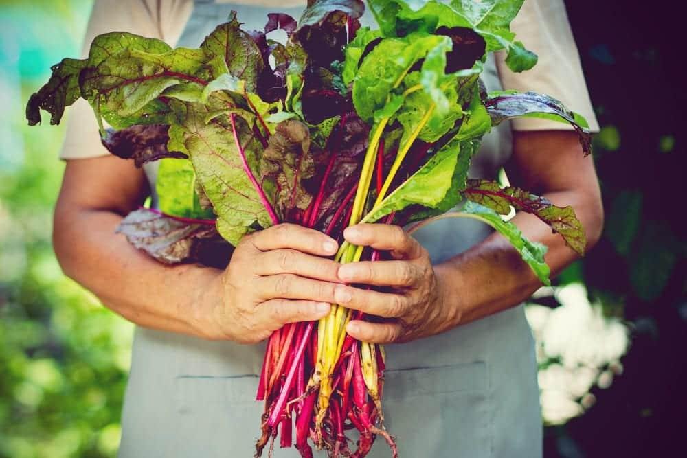 Ernährungs-Guide: die 14 gesündesten Gemüse der Welt - Mangold - Entdeckermagazin - Miomente