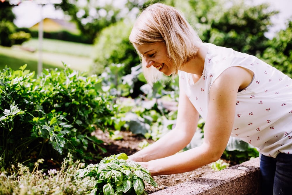 Vegetarische Küche mit Köchin Daniela Leyrer