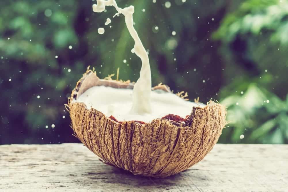 Kokosnussprodukte-Kokos und Kokosmilch - Entdeckermagazin - Miomente