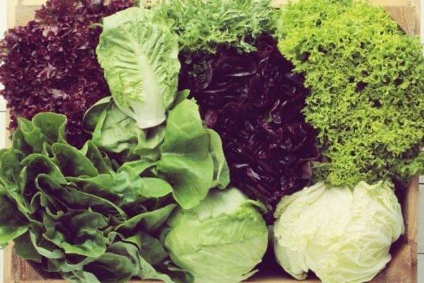 Salat-Lexikon - verschiedene Salatsorten - Entdeckermagazin - Miomente
