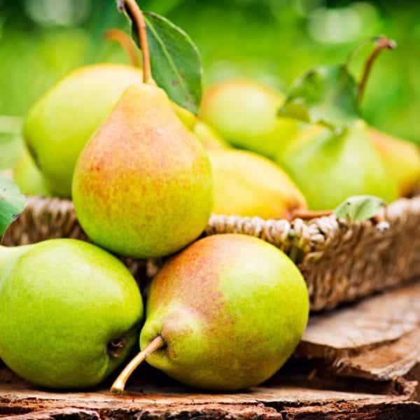 Rezept für Obadzn mit Birne, Obstler und Breznchips von Koch Markus Kieslich - Kochkurse in Wolfratshausen, München   Miomente Entdeckermagazin