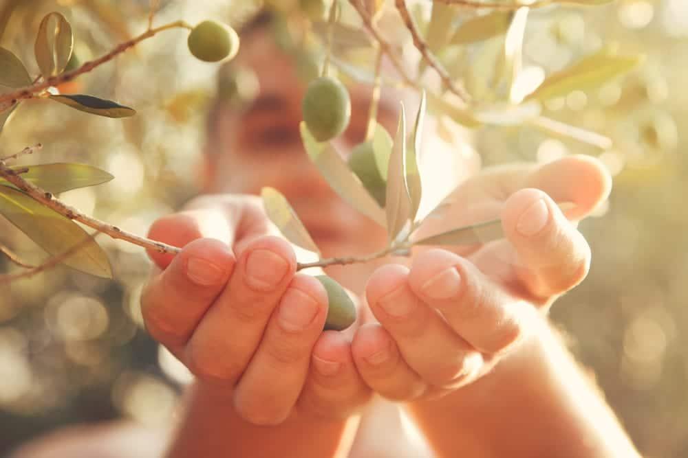 Tipps für den Kauf von Olivenöl