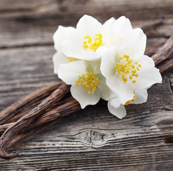 Vanille   Schote und Blüte   gewürzlexikon im Entdeckermagazin Miomente