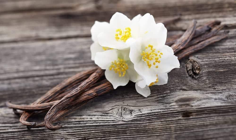Vanille | Schote und Blüte | gewürzlexikon im Entdeckermagazin Miomente