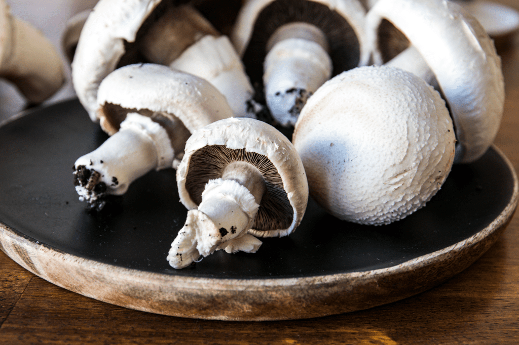 Pilze selber züchten | Bio-Champignons ernten | Entdeckermagazin Miomente
