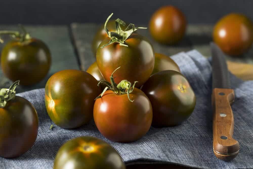 Salattomate Sache - dunkle Färbung