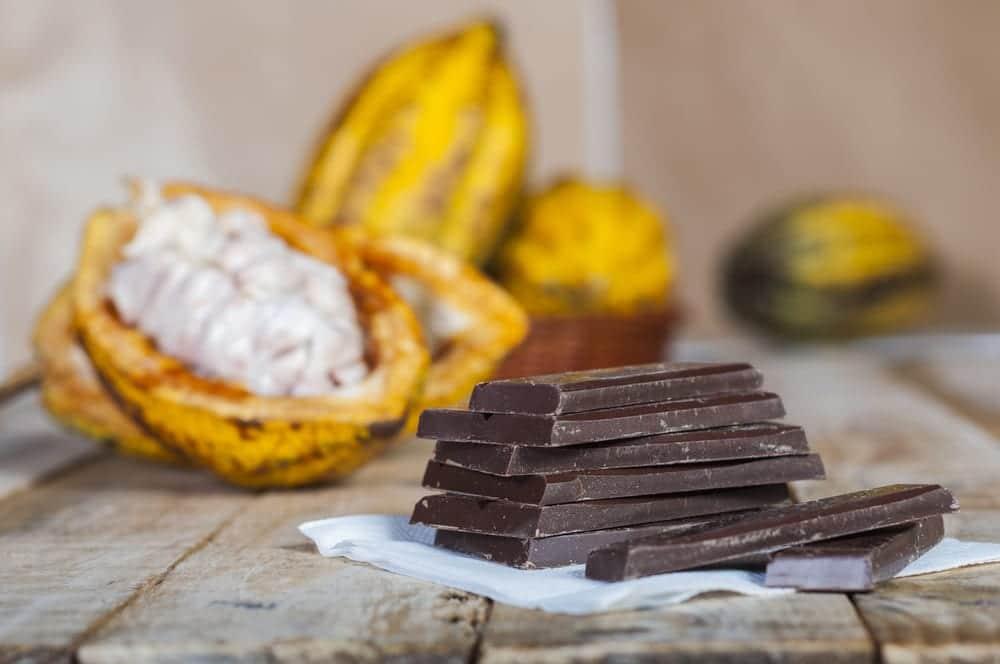 Frische Kakaofrucht mit Pulpe und Schokolade