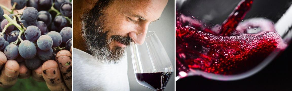 Weinseminare von Miomente
