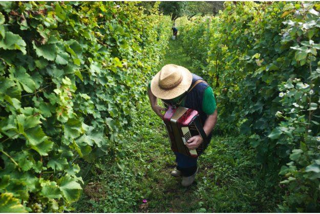 Virtuelle Reise nach Slowenien Akkordeonspieler im Weinberg