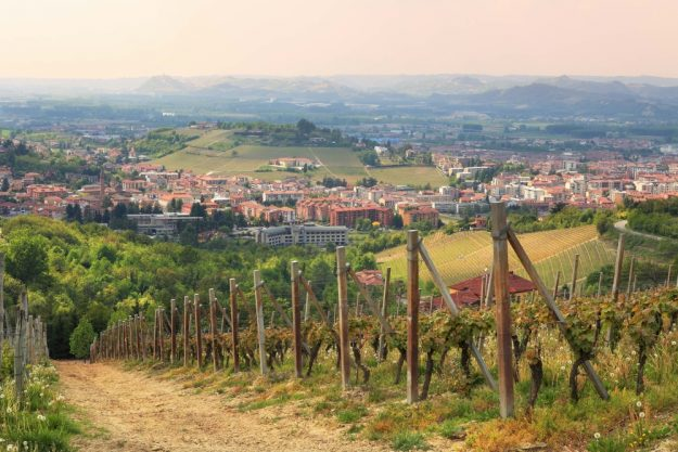 virtuelle Reise ins Piemont Weinstöcke