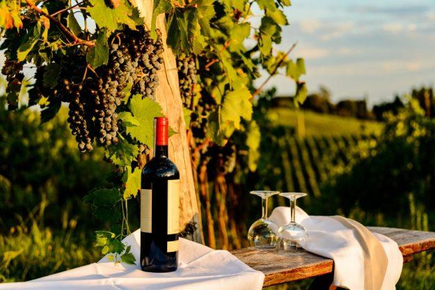 virtuelle Reise in die Toskana, Rotwein am Weinberg