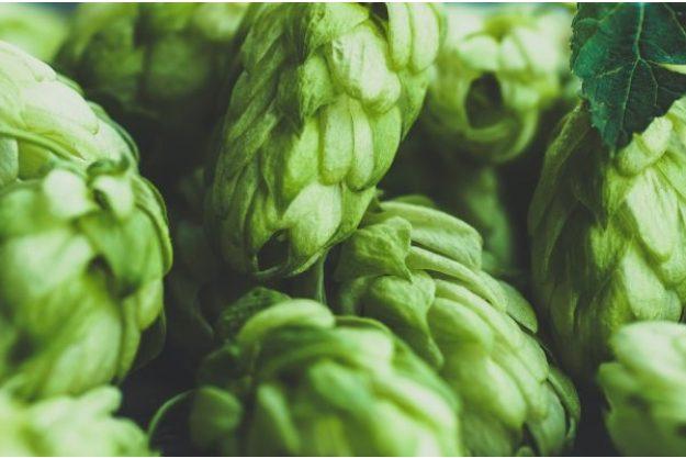 Brauereiführung plus Bierverkostung@Home – Hopfen