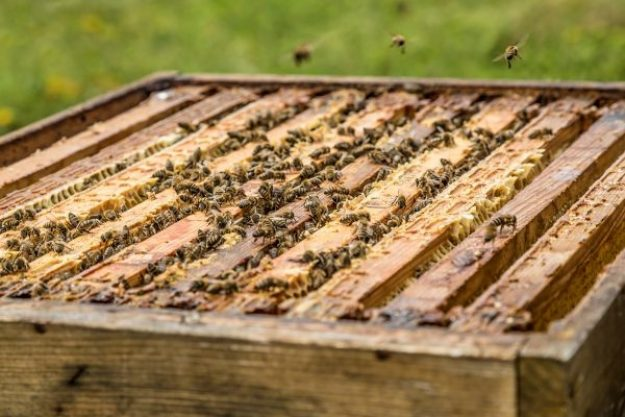 Honig-Verkostung – Bienen