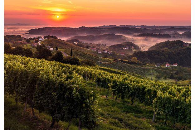 Virtuelle Reise nach Slowenien  Rebstöcke