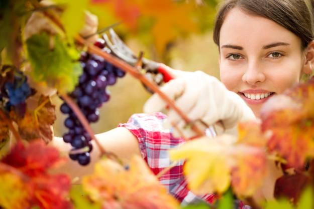 Weinwanderung durchs Remstal