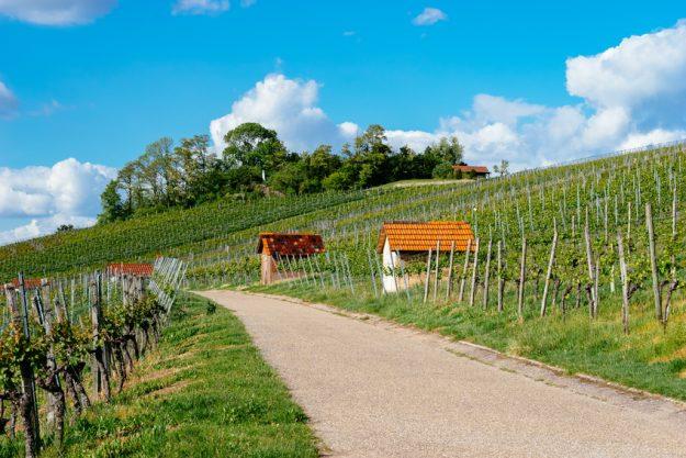 Betriebsausflug Stuttgart mit Weinwanderung Weinlandschaft