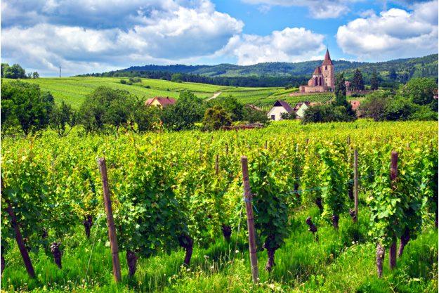 Betriebsausflug Stuttgart mit Weinwanderung Reben