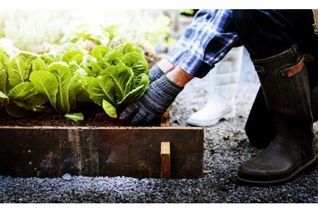 Geschenkidee für Lokalhelden – Selber pflanzen und ernten