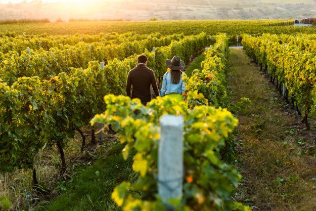 Weinprobe Stuttgart –Hand in Hand Weinberg