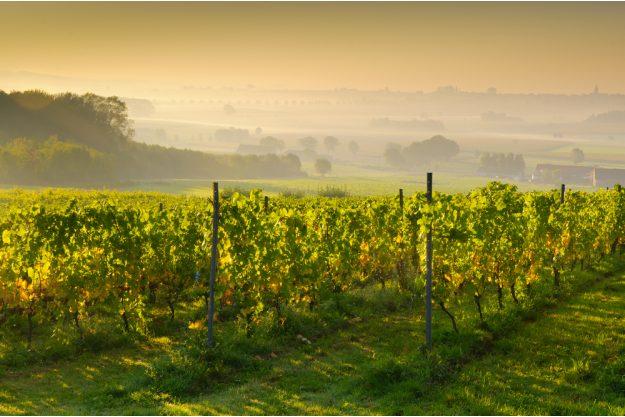 Weinprobe Stuttgart –Weinberge