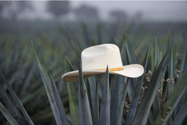 Tequila- und Mezcal-Tasting Berlin – Agave
