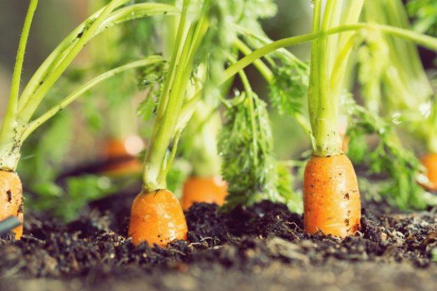 Veggie-Kochkurs-Gutschein –Frische Karotten