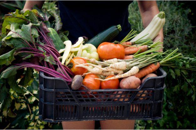 veganer Kochkurs Dresden – Gemüsekiste
