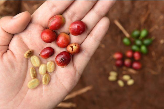 Geschenkgutschein Baristakurs – Kaffeebohnen