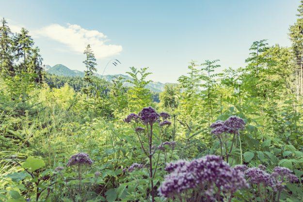 Kräuterwanderung München – Wildpflanzen