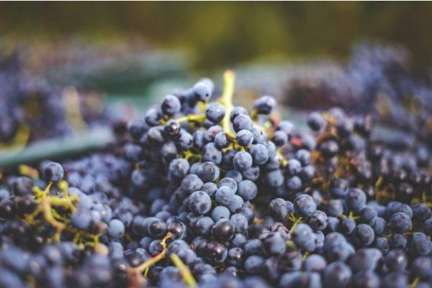 Weinseminar München –Trauben