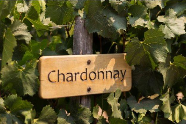 Weinseminar München –Rebsorte Chardonnay