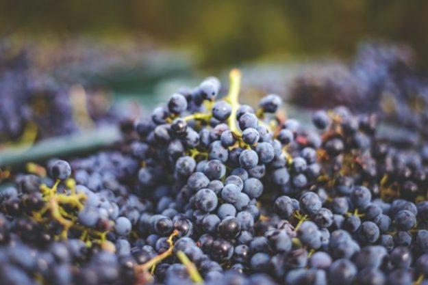 Weinseminar München –Weinrebe