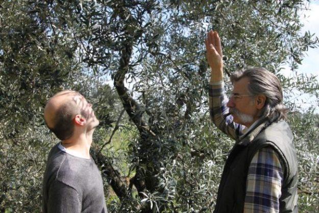 Olivenöl-Tasting at Home – Irgendwo in Italien