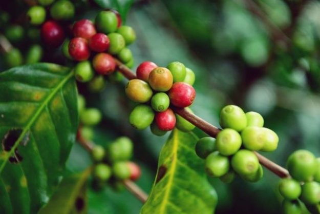Barista-Kurs Bonn –Kaffeebohnen
