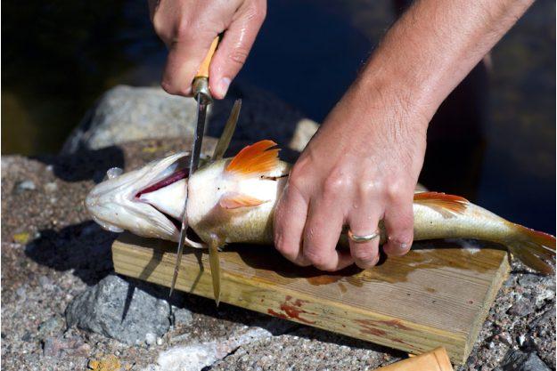 Firmenevent in der Küche - Fisch filetieren
