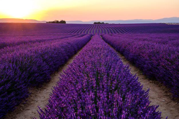 Französischer Kochkurs Wuppertal – Lavendelfeld in Provence