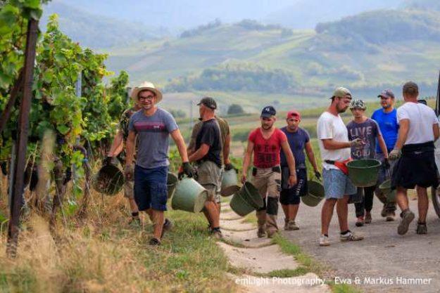 Weinwanderung online mit Essen Wein lesen