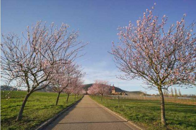 Weinwanderung online mit Essen Frühling